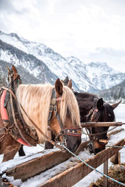 Horses in Snow - Bram Art Photography