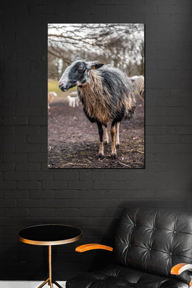 Silly Sheep One - Bram Art Photography