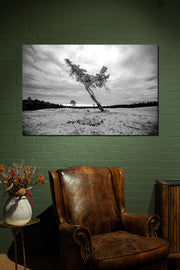 Wobbly Wood Black & White - Bram Art Photography
