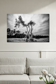 Terrifying Tree Black & White - Bram Art Photography