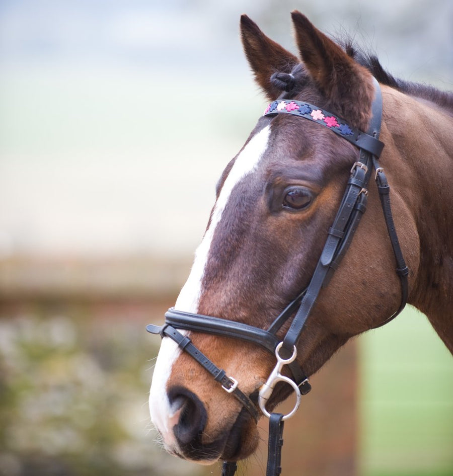 Black Leather Browband - Berry/navy/pink