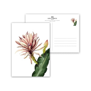 POSTKARTE - RED CACTUS FLOWER
