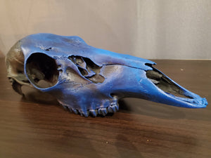 Ethically Sourced & Hand Painted Animal Skulls