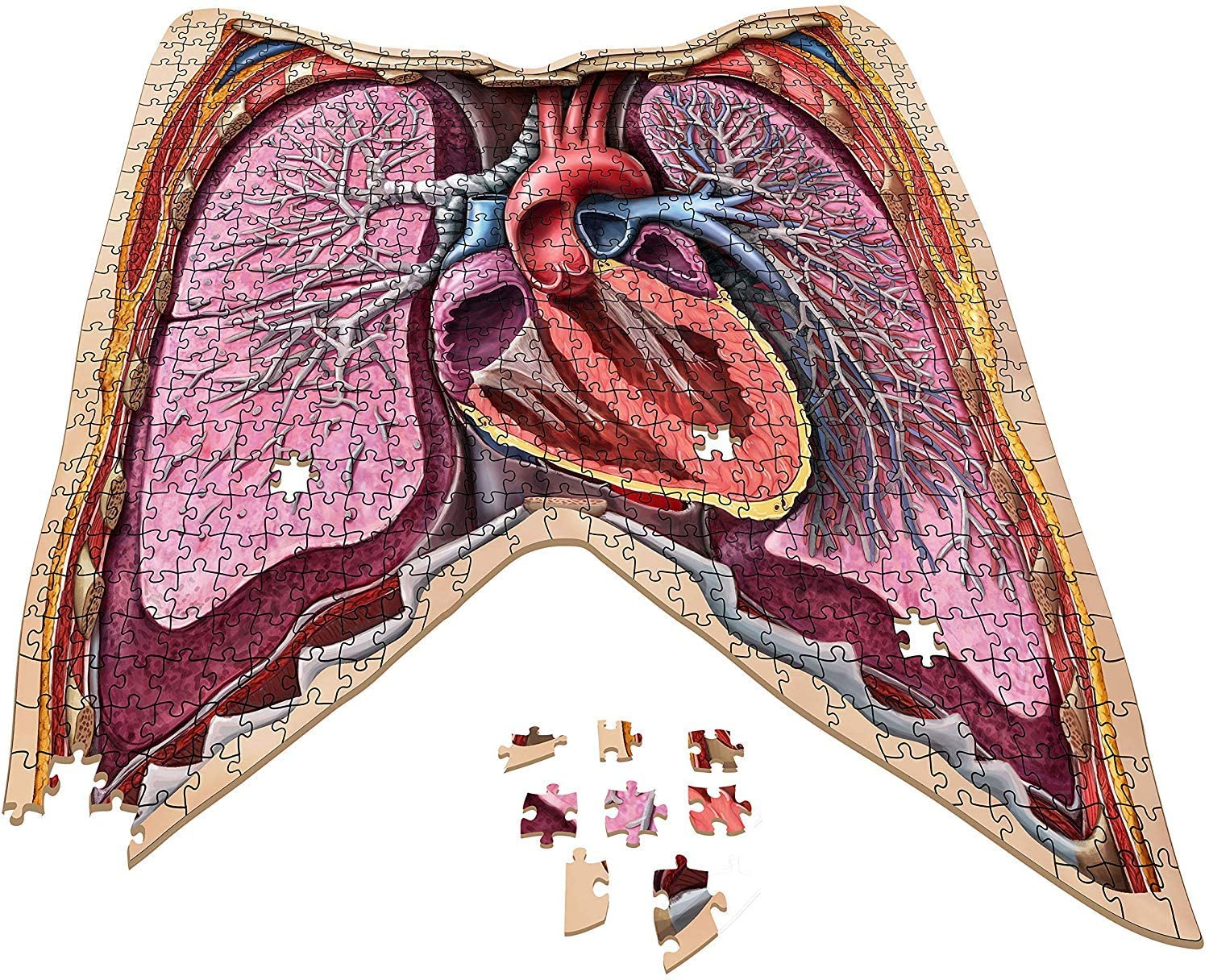 Genius Games Dr. Livingston's Human Anatomy Jigsaw Puzzles - The Thorax | Battle Bliss
