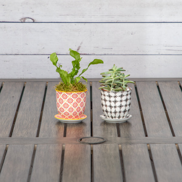 "3"" Assorted Plant in Ceramic Container - Brewpoint Pop-Up Shop"