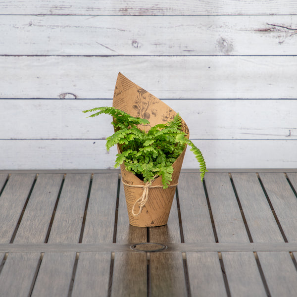 "4"" Fern in Botanic Vibes Pot Cover - Brewpoint Pop-Up Shop"