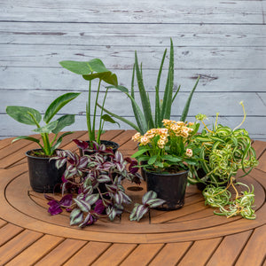 "6"" Indoorables 'Beauty on the Inside Series' - Brewpoint Pop-Up Shop"