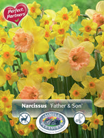 Narcissus Father & Son - 12PK