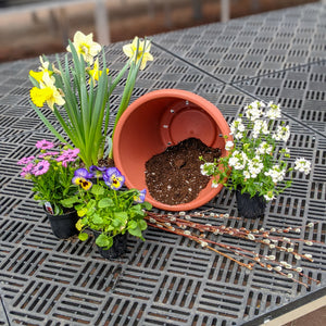 "12"" Cool Season Annual Container DIY Kit"