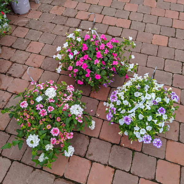"10"" Proven Winners Sun Loving Combination Hanging Basket - Assorted Colors"