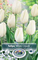 Tulip White Clouds - 8PK
