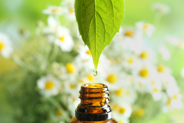 benefits of essential oils essential oils for focus