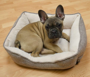 Truffle Square Rosewood Dog Bed