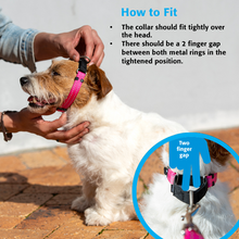 Load image into Gallery viewer, ROGZ Utility Web Control Dog Collar