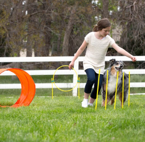 Zipzoom Agility Kit, Outdoor