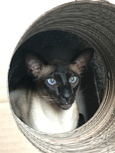 Load image into Gallery viewer, Cat Shaped Scratch Post & Tunnel