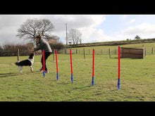 Load and play video in Gallery viewer, Rosewood Dog Agility Slalom (Weaving Poles)  bizzibabs.com