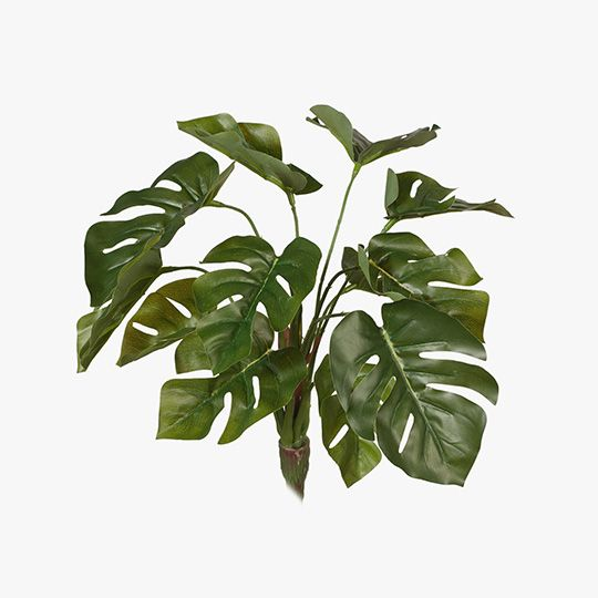 FI7542GR Monstera Bush