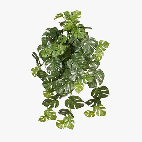 FI7590GR Monstera Hanging Bush Green 58cml