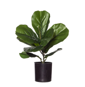 79.187.12 EG Fiddle Plant­Garden Pot 26x30cm
