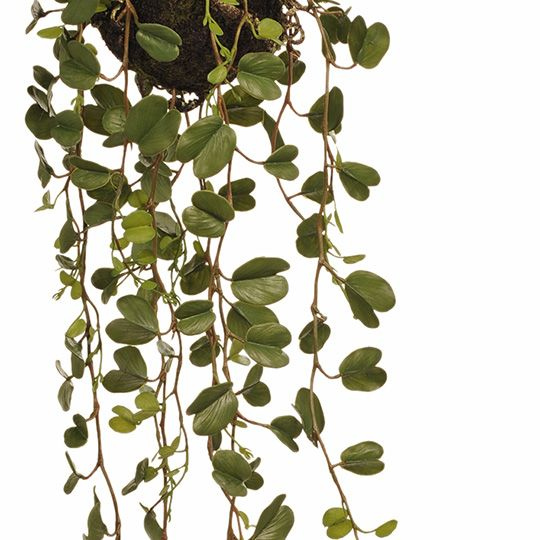 FI7927GR Hoya Ball Hanging