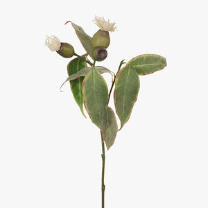 FI7354CR EUCALYPTUS POD FLOWERING-CREAM 50CM