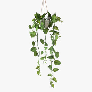 FI8148GR Philodendron Hanging Pot