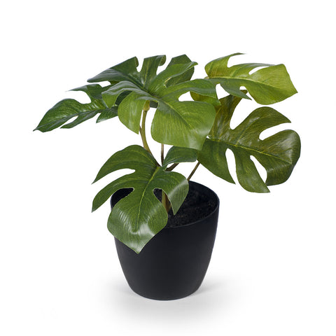 FI8173GR Monstera in Pot