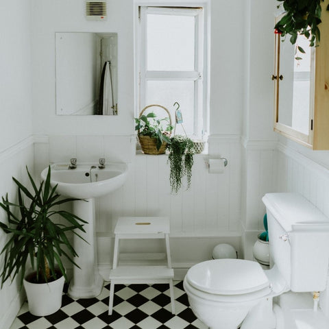 black and white bathroom with nature accent