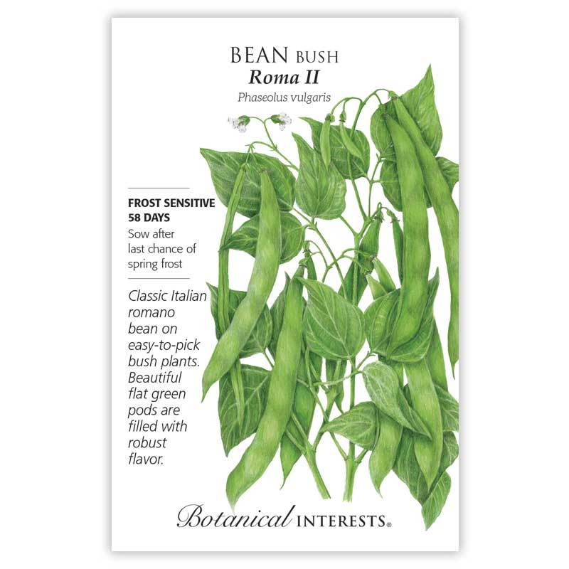Bean Bush Roma II