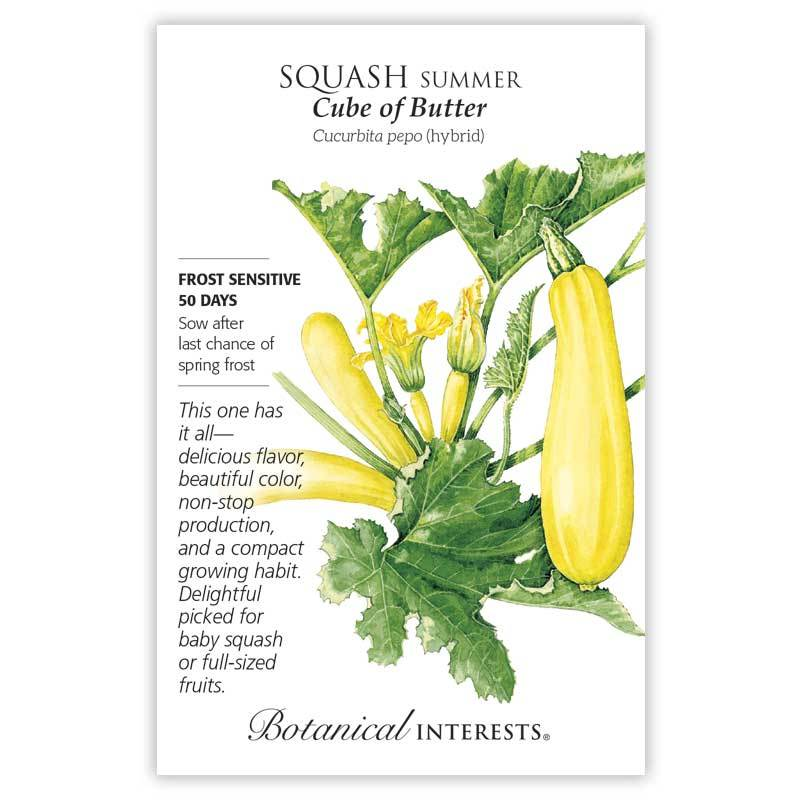 Squash Summer Cube of Butter