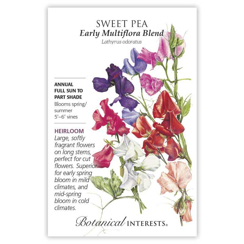 Sweet Pea Early Multiflora Blend