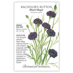 Bachelor Button Black Magic