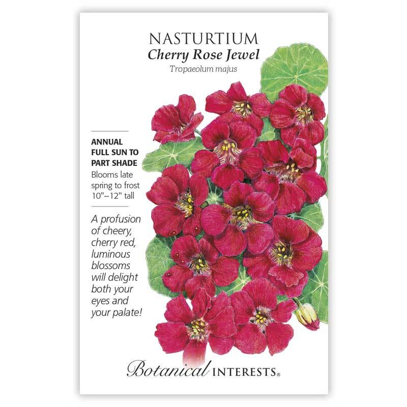 Nasturtium Cherry Rose Jewel