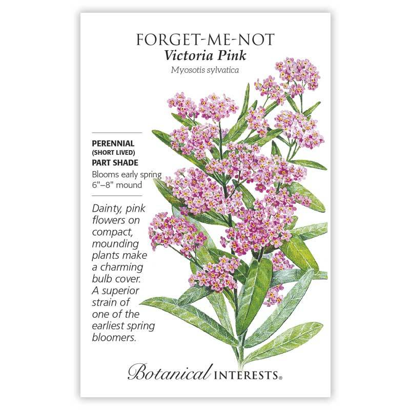 Forget-Me-Not Victoria Pink