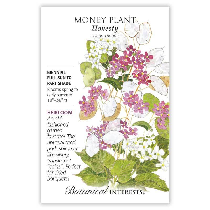 Money Plant Honesty
