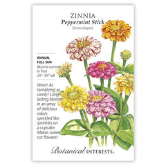 Zinnia Peppermint Stick
