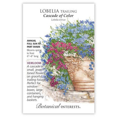 Lobelia Trailing Cascade of Colo
