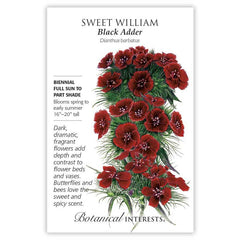 Sweet William Black Adder