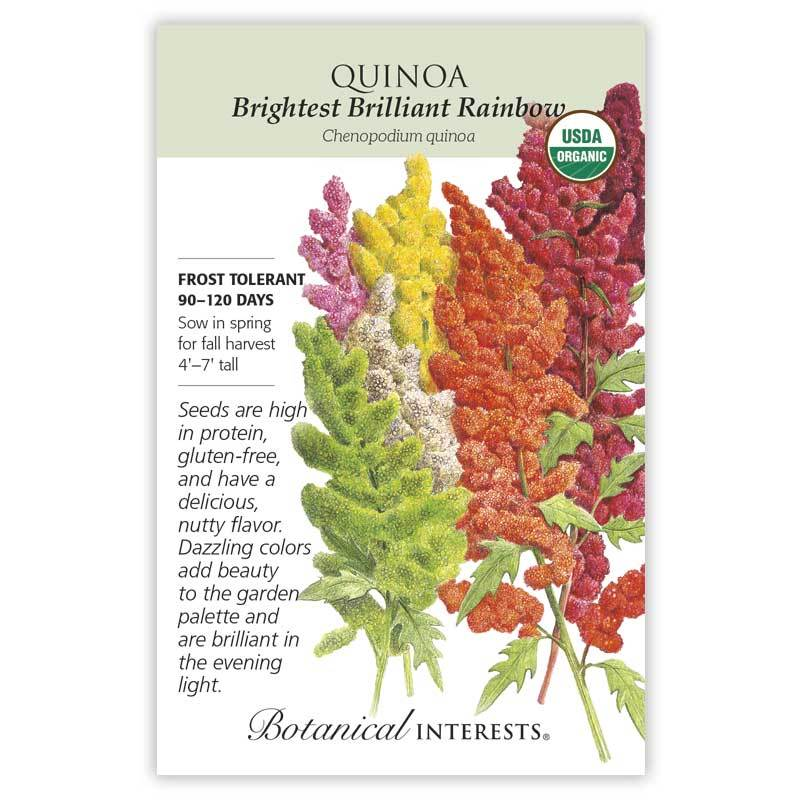Quinoa Brightest Brilliant Rainbow Organic