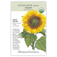 Sunflower Sunspot Organic