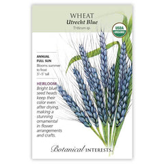 Wheat Utrecht Blue Organic