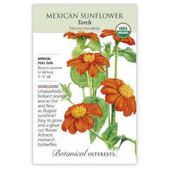 Sunflower Mexican Torch Organic