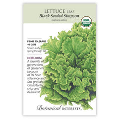Lettuce Leaf Black Seeded Simpson Organic