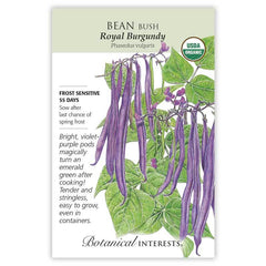 Bean Bush Royal Burgundy Organic