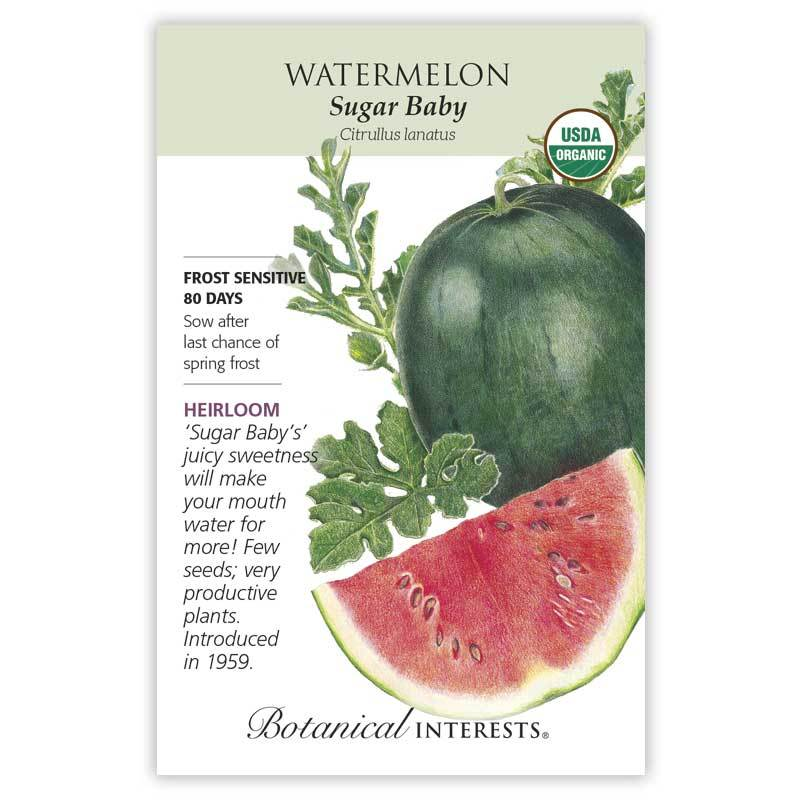 Watermelon Sugar Baby Organic