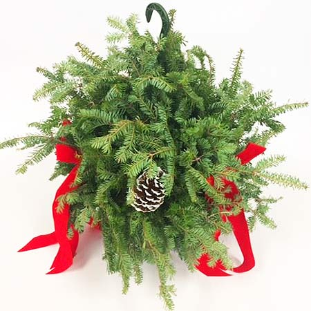 Evergreen Hanging Basket 10""