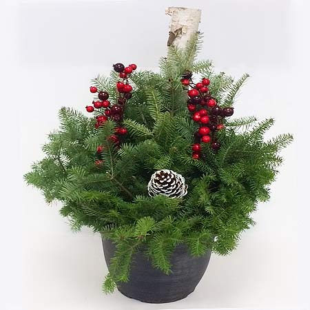 Christmas Evergreen Planter
