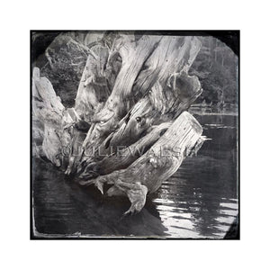 Driftwood Photo Panel