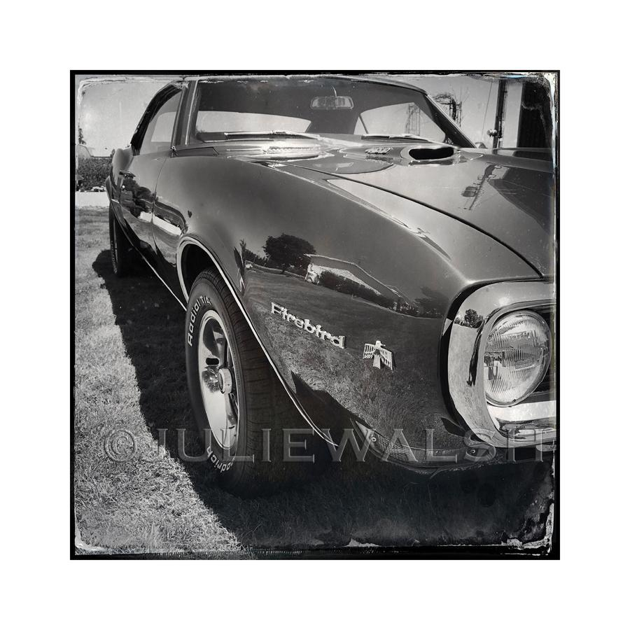 Firebird Photo Panel-Photo-WorkShopGallery